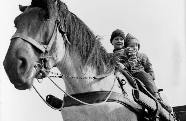 Um die Beziehungen von Mensch und Tier im Wandel geht es in der neuen Ausstellung im LWL-Industriemuseum Zeche Hannover in Bochum. Das Foto aus den 1950er Jahren ist das Titelmotiv der Schau. Foto: LWL-Medienzentrum/Helmut Orwat