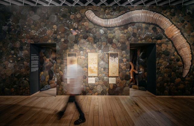 """Die begehbare Bodenkammer lässt die Ausstellungsbesucher:innen von """"Alleskönner Wald"""" eine Reise in den Waldboden unternehmen. Foto: LWL/Steinweg"""