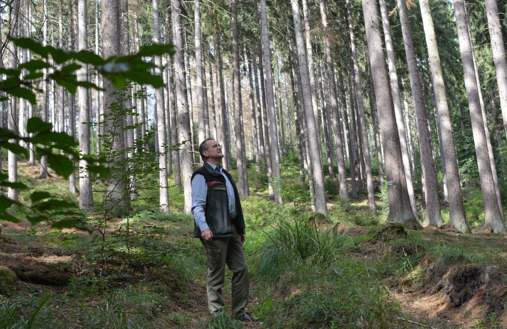 Dr. Bertram Leder blickt sorgenvoll auf die Fichten in einem Waldstück bei Arnsberg. Foto: Jürgen Bröker