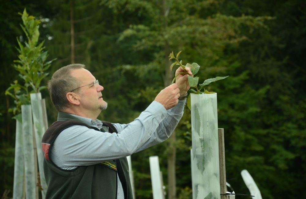 Anpflanzversuche sollen Aufschluss darüber geben, welche Baumarten mit dem Klimastress besser zurechtkommen. Foto: Jürgen Bröker