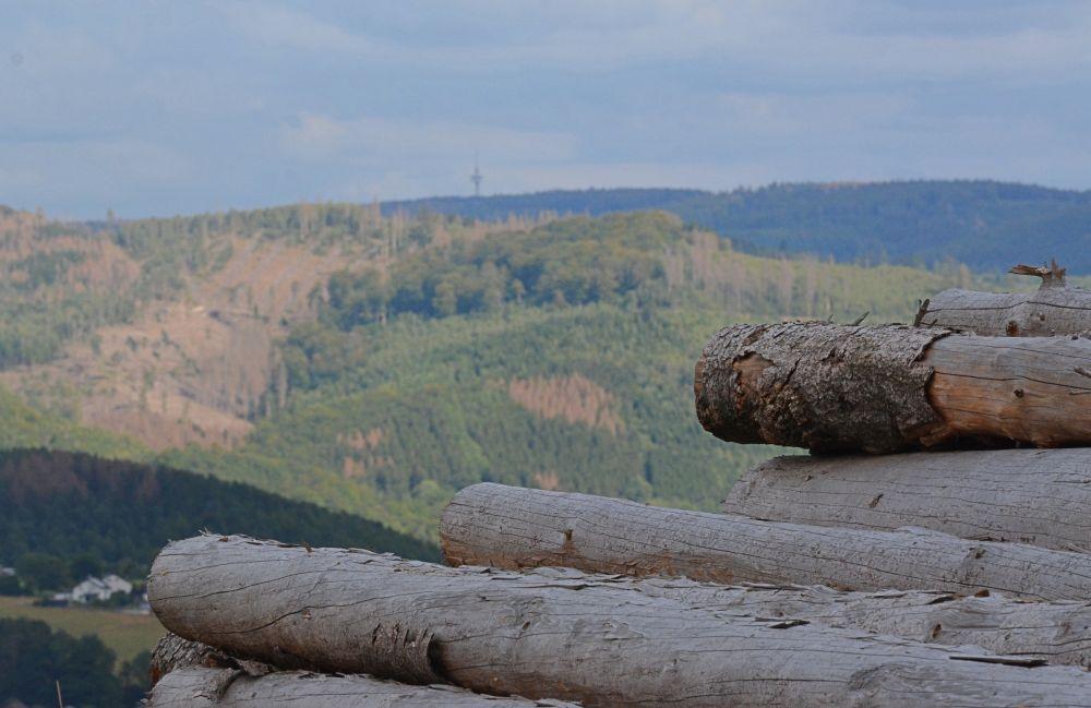 In Westfalens Wäldern sind große Mengen Holz angefallen, zugleich nehmen die Kahlflächen zu wie hier bei Arnsberg im Sauerland. Foto: Jürgen Bröker