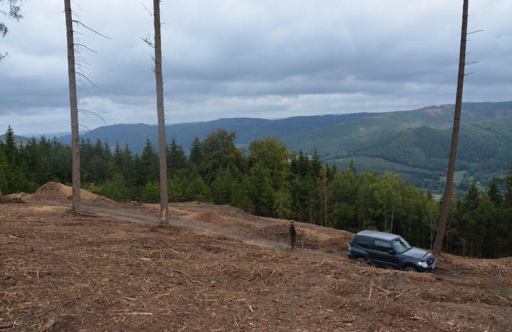 """Kahle Flächen, wo vor kurzem noch ein dichter Wald stand. Die von Plettenbergs mussten in den vergangenen Monaten einige Hektar Wald """"begraben"""". Foto: Jürgen Bröker"""
