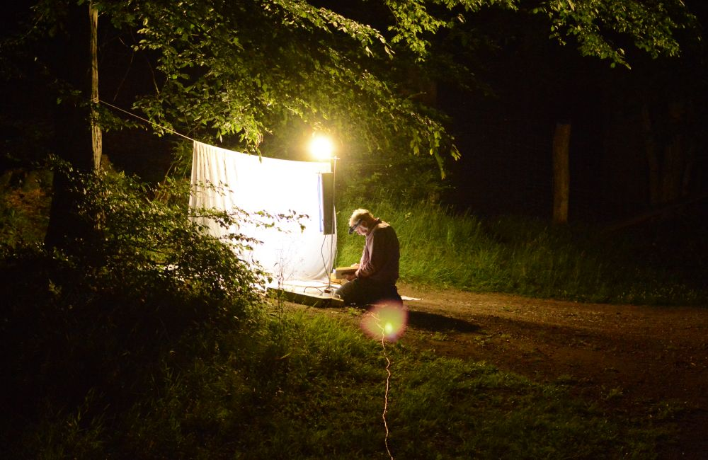 uf Insekten-Nachtfang mit Werner Schulze. Foto: Jürgen Bröker/wsp