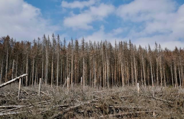 Der Waldzustandsbericht weist die stärksten Waldschäden seit 35 Jahren auf. Foto: pixabay
