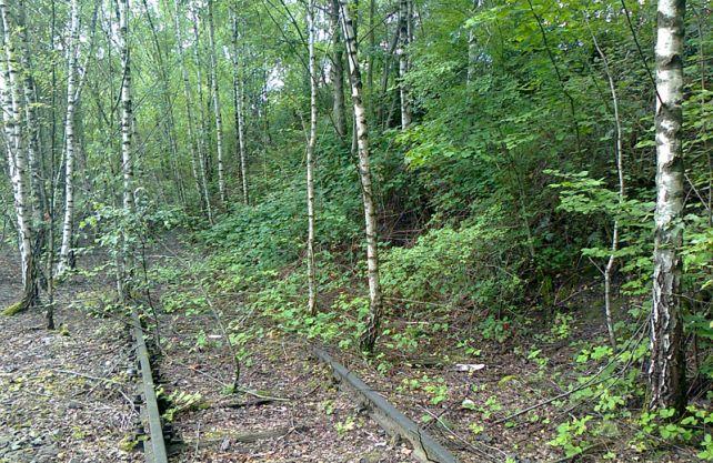 Die Natur erobert sich auf Rheinelbe die Flächen zurück. Foto: Wald und Holz NRW