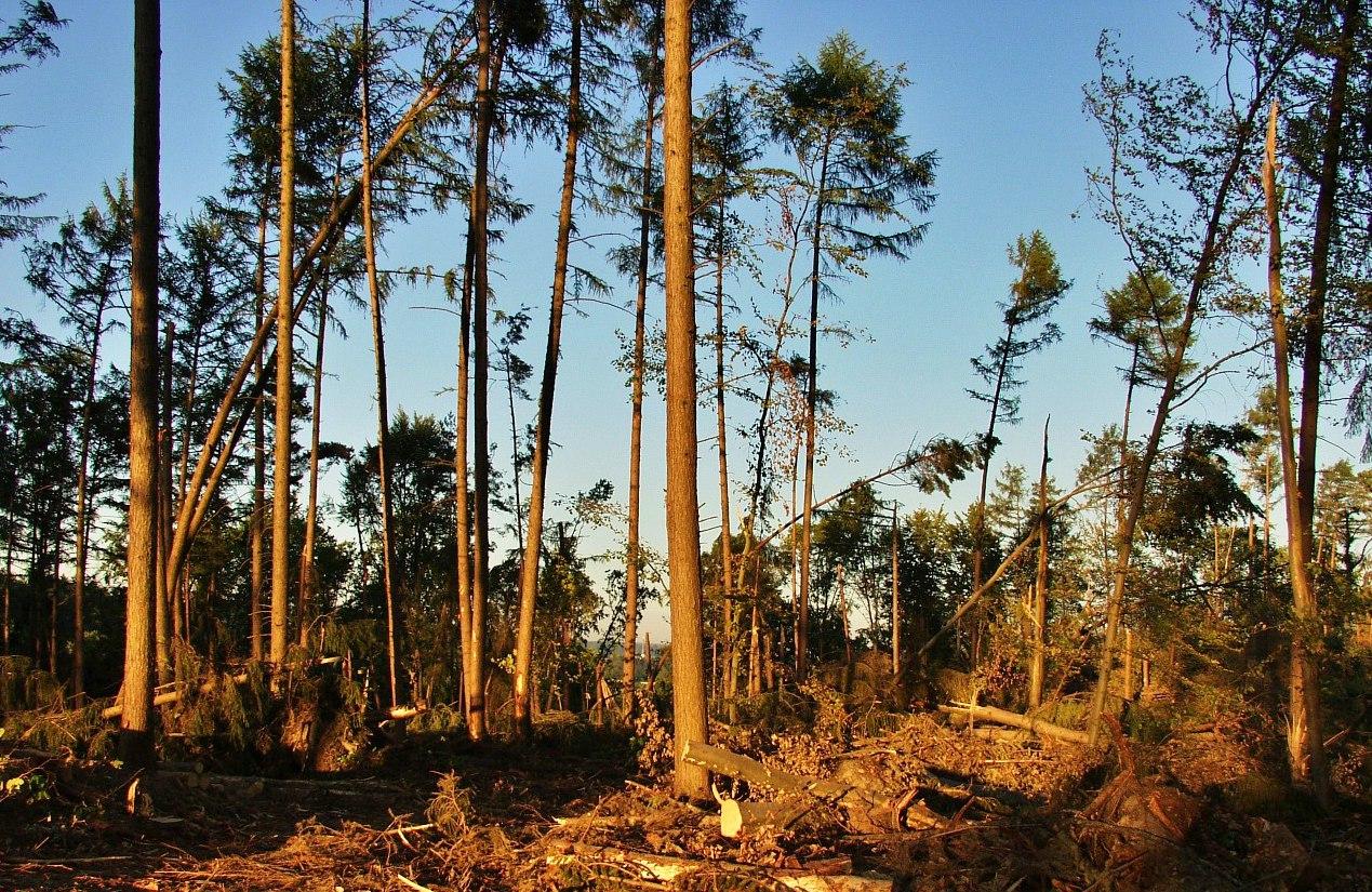 Friederike hat in Ostwestfalens Wäldern und im Sauerland große Schäden angerichtet. / Foto: pixabay